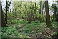 TQ7934 : Stream in Dibley Shaw by N Chadwick
