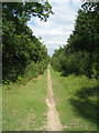 SU8141 : Byway through Alice Holt Forest by Sandy B