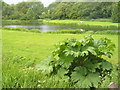 TQ0547 : Weston Fishery, Albury by Colin Smith