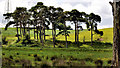 J2967 : Trees near Lambeg by Albert Bridge