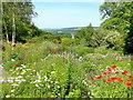 SX4968 : The Garden House garden in June - 8 by Jonathan Billinger