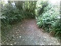 SX5455 : Path off Back Lane, near Plympton by Alex McGregor