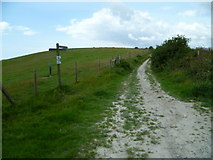 TQ2010 : Restricted byway junction with footpath on Windmill Hill by Shazz