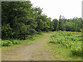 SO5188 : Woodland bridleway at Munslow Common by Row17