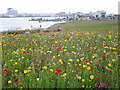 ST1973 : Wildflower display on Cardiff bay barrage by Rudi Winter