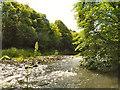 NZ1860 : River Derwent, Derwenthaugh Park by David Dixon