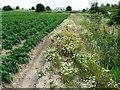 SE5222 : Flowery field boundary by Christine Johnstone