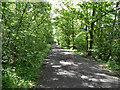NZ1961 : Derwent Walk, Dam Head Wood by David Dixon