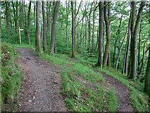 NY2824 : Path junction in Brundholme Wood by Stephen Craven