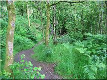 NY2824 : Footpath in Brundholme Wood by Stephen Craven