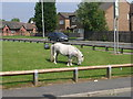 SE1829 : Pony - grazing off Coleshill Way by Betty Longbottom