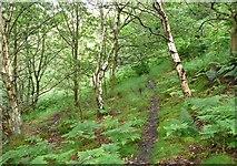 SE0125 : Hebden Royd Path 61 in Hathershelf Scout Wood, Mytholmroyd by Humphrey Bolton