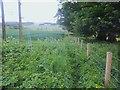 NU1814 : Northumberland farmland by Michael Dibb