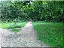 TQ2372 : Pathways, Putney Heath by Alex McGregor
