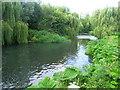 SU6859 : River Loddon by Sandy B