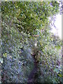 TM3764 : Footpath to St.Peter's Church through Gardener's Belt by Adrian Cable