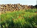 SU0314 : Timber stack near Squirrel's Corner by Maigheach-gheal