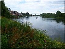 TQ1672 : The River Thames from Radnor Gardens by Marathon