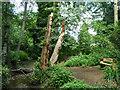 TQ3766 : Wood carvings in High Broom Wood by Robin Webster
