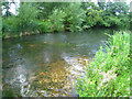 SU6859 : Clear waters of the Loddon by Sandy B