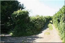SX4975 : Peter Tavy: West Devon Way by Martin Bodman
