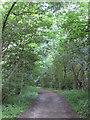 SE3243 : Heading towards Lofthouse Lodge by Pauline E