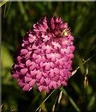 SX9066 : Spider on orchid, Barton tip by Derek Harper