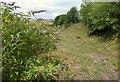 SX5254 : Path to Chelson Meadow by Derek Harper