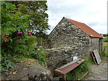 G8078 : Old shed at Coolshangan by louise price