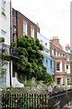 TQ1877 : Wisteria on House at Kew Green by Christine Matthews