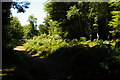 SS9444 : Tivington Common by Christopher Hilton