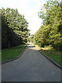TQ3896 : Gilwell Lane by Roger Jones