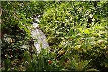 SX0455 : Waterfall in the Rainforest Biome by Steve Daniels