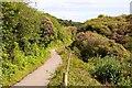SX0055 : The Clay Trail by Steve Daniels