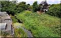 J1264 : Disused Lagan canal. Aghalee (1) by Albert Bridge