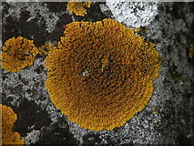 TL4658 : Lichen in Mill Road Cemetery by Keith Edkins