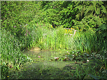 TQ6927 : Pond at King's John Garden by Oast House Archive