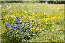 NT2864 : Flower Meadow Springfield Mill Site by Tom Richardson