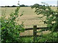 SE4314 : Wheatfield east of the Pontefract Road by Christine Johnstone
