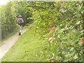 TQ2351 : Pilgrims Way Below Juniper Hill by Colin Smith