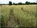 SE4516 : Vehicle tracks in a wheatfield by Christine Johnstone