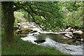 SX6672 : Dartmoor Forest: West Dart by Martin Bodman
