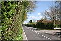 TQ8115 : A28, Westfield by N Chadwick