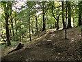 SD7317 : Woodland Path by David Dixon