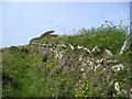 SM8517 : Flower-decked drystone wall by Marion Phillips
