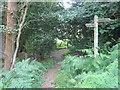 TQ4039 : Tandridge Border Path meets Sussex Border Path by David Anstiss