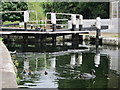TQ1479 : Coots at Lock 90 by Oast House Archive