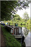 TL3706 : Nookie Bare, Narrowboat, River Lee Navigation by Christine Matthews