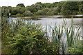 SW5731 : Fishing lake by Elizabeth Scott