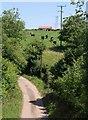 ST0217 : Cattle at Higher Reed Farm by Derek Harper